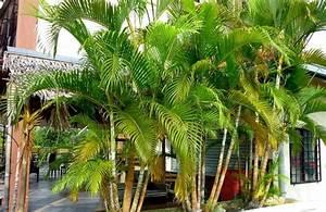 Palmenarten Für Draußen : garten pflanzen gartengestaltung gartenbau ~ Lizthompson.info Haus und Dekorationen