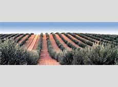 Dati relativi al mercato mondiale dell'olio di oliva