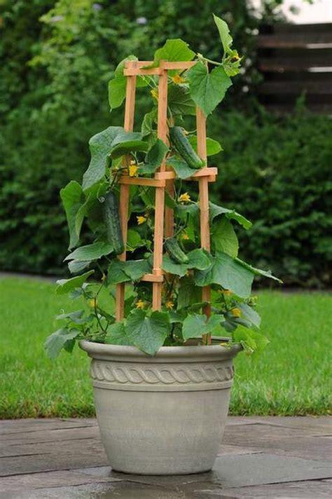 garden in a can 15 stunning container vegetable garden design ideas tips