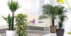 Plante D Intérieur Haute : plante verte maison euroseconde ~ Dode.kayakingforconservation.com Idées de Décoration