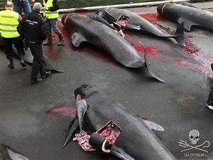 Another Bloody Slaughter In The Name Of Tradition In The