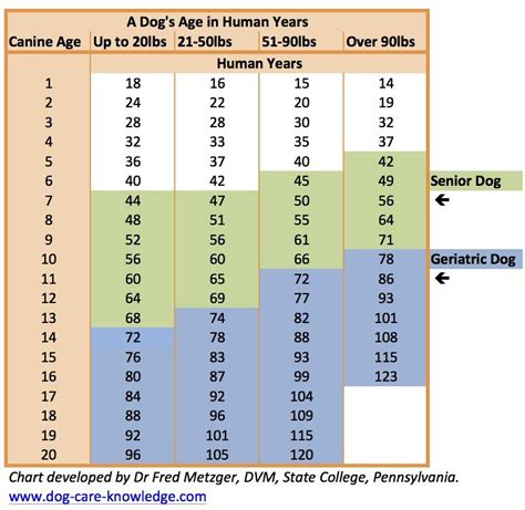 chart showing  dogs age  human years developed  dr