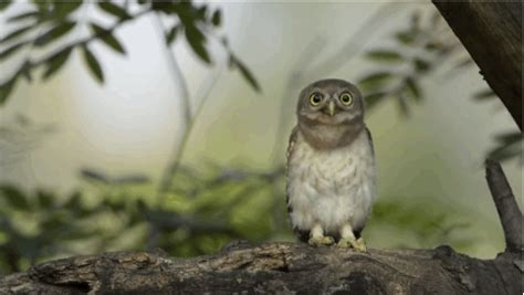 Owl GIF - Find & Share on GIPHY