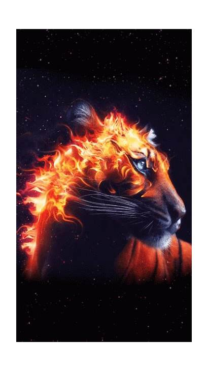 Tiger Wallpapers Animal Fire Background Backgrounds Amazing
