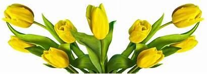 Easter Tulip Flower Nature Flowers Plant Pixabay