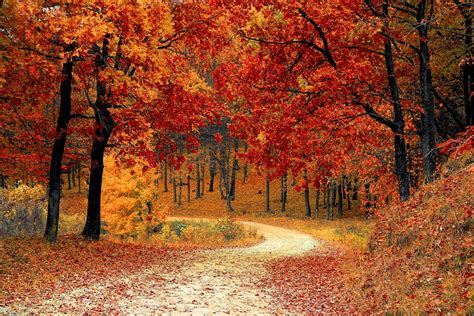 fall color fall colors report
