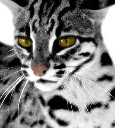 Slightly Obsessed With These Bengal Cats Odds