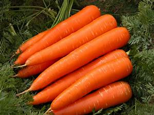Carrot exports from Western Australia | Agriculture and Food  Carrot