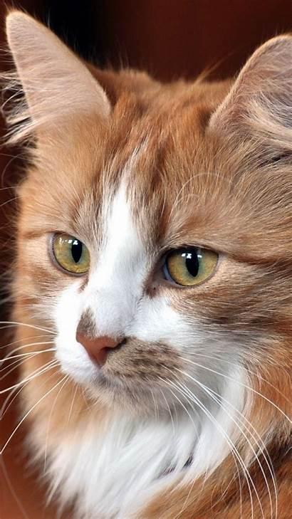 Cat Cool Face