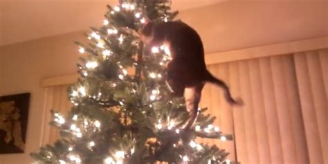 jerk cats return  time  ruin christmas huffpost