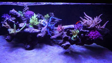 Reef Aquascape by Deltabecken 500 Liter Als Floating Reef Aquascape Reef