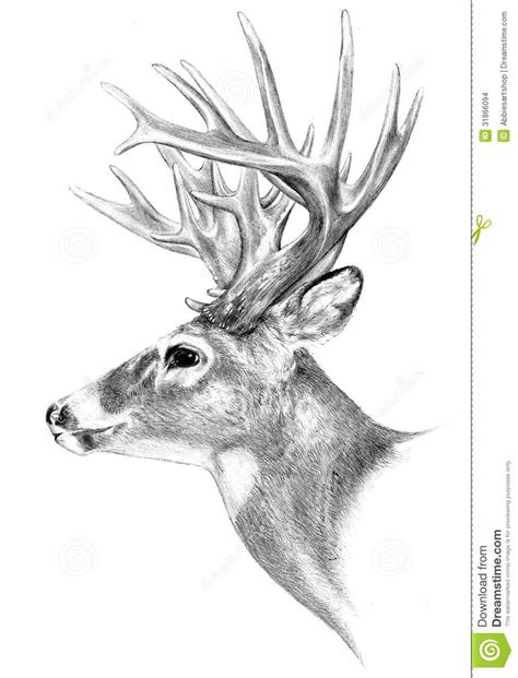 animal horn clipart  draw clipground