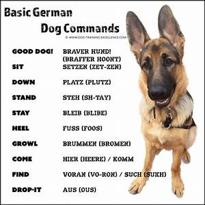 21 german dog commands to train your dog for Dog training commands