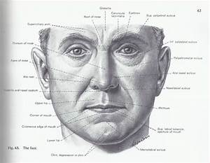 Facial Surface Landmarks