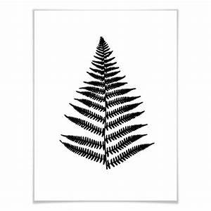 Schwarz Weiß Wandbilder : poster farn wandbild wanddekoration wanddeko pflanzen schwarz wei druck natur ~ Watch28wear.com Haus und Dekorationen