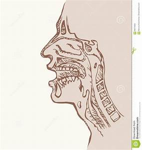 Cross Section Of Nose And Throat Cartoon Vector