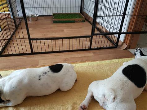 recinto per cani in casa tectake recinto grande per cuccioli esterno recinto per