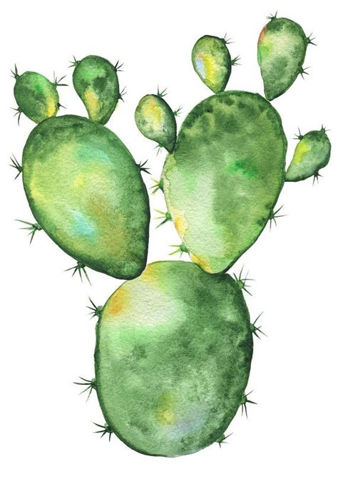 cactus watercolor clipart blossom succulents hand