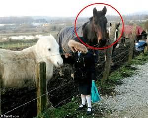 horse bites   young girls  thumb   fed
