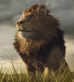 About Wild Animals lion: Adaptations of African Lions