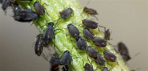 Identifying Common Garden Pests Secretgardencouk