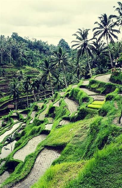 Bali Rice Ubud Indonesia Fields Wallpapers Amazing