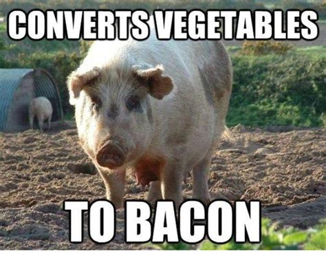 Funny Pig Memes - converts vegetables to bacon funny pig meme