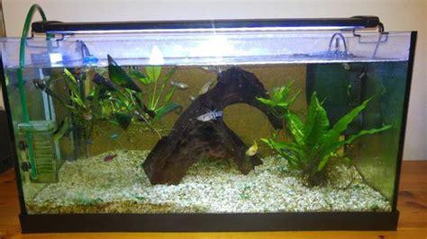 fische für 60 liter aquarium aquarien eco tageslichtsimulation beleuchtung led aquarium voll spectrum reef coral fish