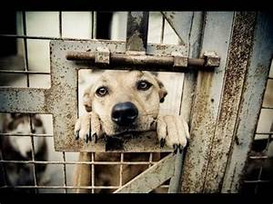 The Sad Truth Behind Animal Shelters ★★★★★ - YouTube