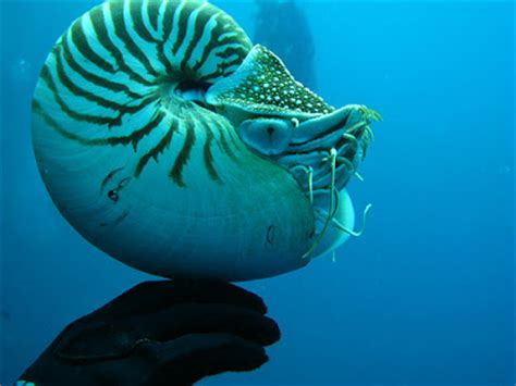 cool sea creatures awesome wallpapers