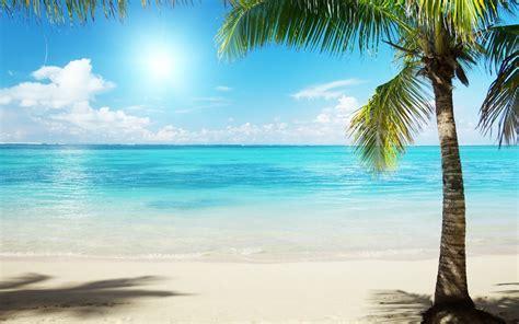 landscape palm palma beaches water sand sun