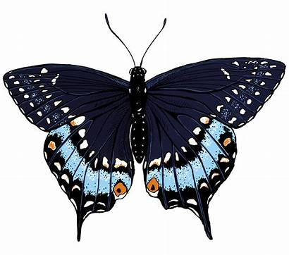Illustrations Butterflies Butterfly Papillon Clipart Cliparts Monarque