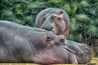 Safari Tanzania Animals Tours Should Holidays