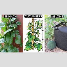 6 Climbing And Vining Vegetables You Can Grow In