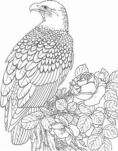 Eagle Coloring Pages Animals Wildlife Bald American