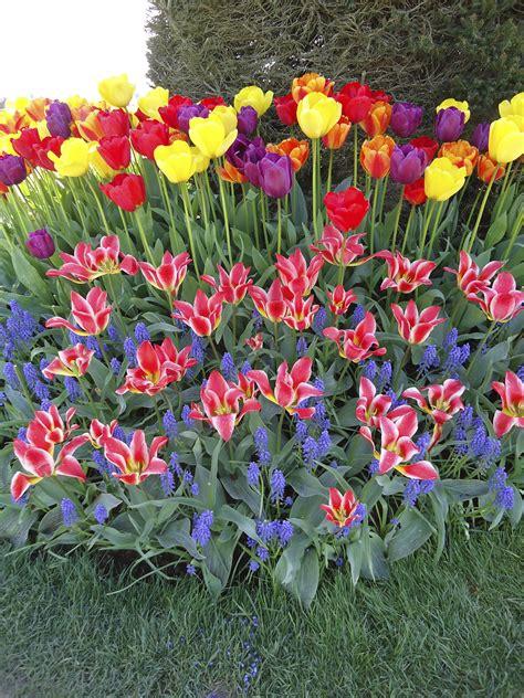 narcissus that bloomin garden