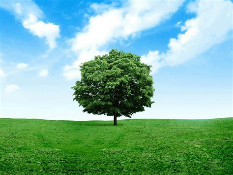 Tree Wallpaper Png by Wallpapers Lonely Tree Photography Wallpapers