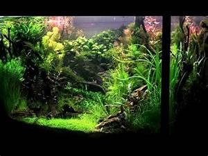 Aquarium Einrichten Anfänger : aquarium einrichten f r anf nger teil 1 aquascape 30 ~ Lizthompson.info Haus und Dekorationen