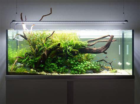 i couldn t increase my co2 uk aquatic plant society