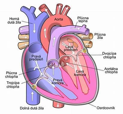 Heart Diagram Human Labels Sk Labelled Svg