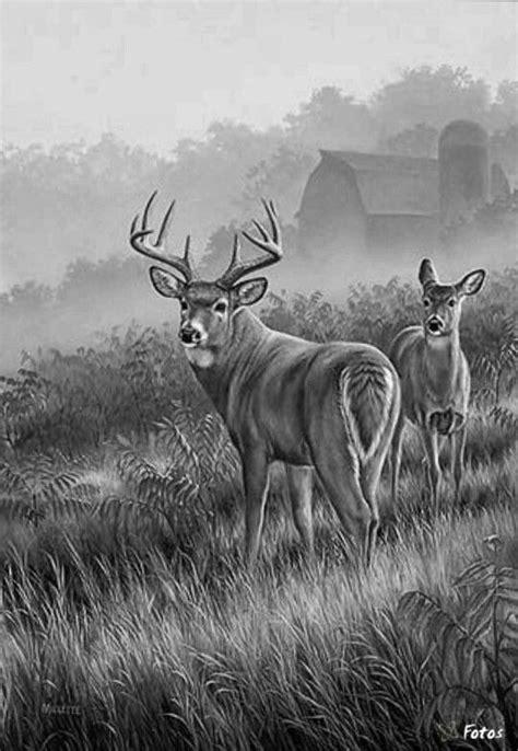83 best deer images on Pinterest   Deer paintings, Deer