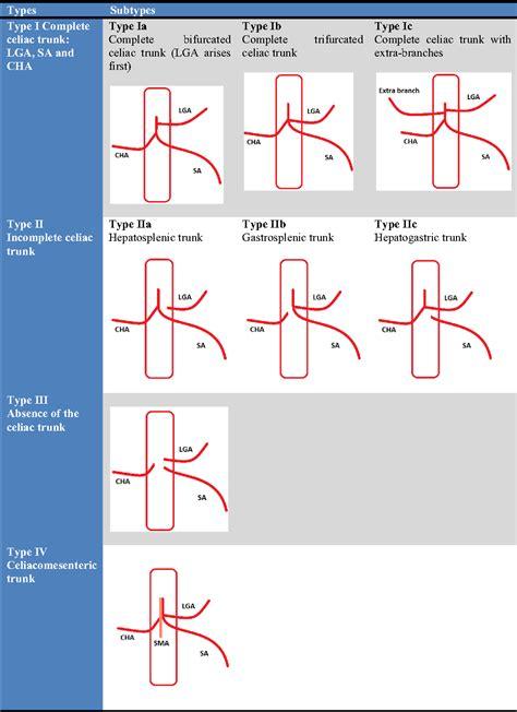 Celiac Artery Axis Anatomy