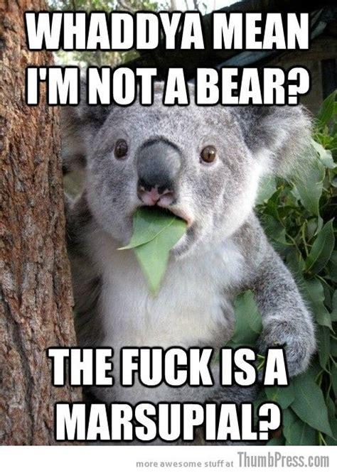 Truth Bear Meme - best 25 bear meme ideas on pinterest funny bears animal humour and funny deer pictures