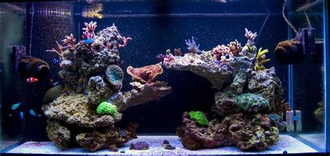 Live Rock Aquascape Designs 55 gallon live rock aquascape pictures of just your