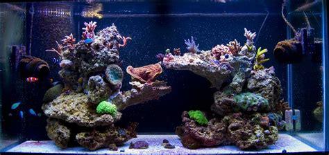 Marine Aquarium Aquascaping by 55 Gallon Live Rock Aquascape Pictures Of Just Your