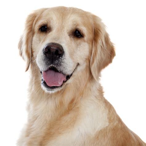 la castration et st 233 rilisation du chien royal canin