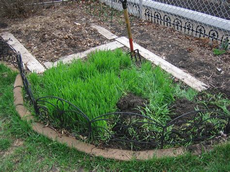 garden cover crop 5 things you must do now to get your garden ready for winter