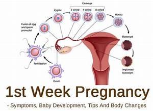 1st Week Pregnancy  Symptoms  Baby Development  Tips And