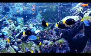 Fish Aquarium Screensaver Free Windows 10