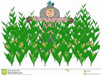 Corn Field Scarecrow Clipart Cartoon Fields Spaventapasseri